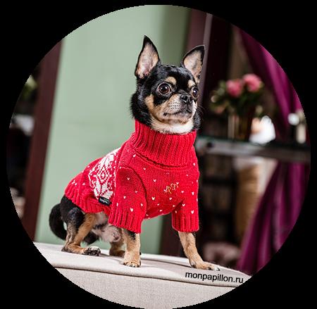 одежда-для-собак.jpg