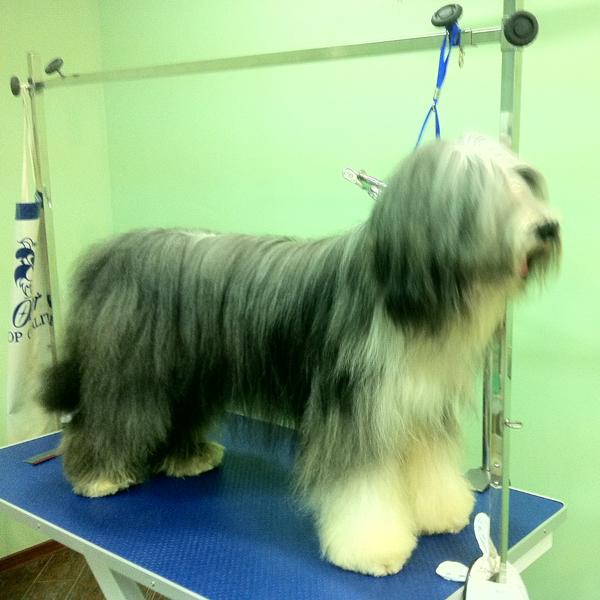 Стрижка больших собак 2