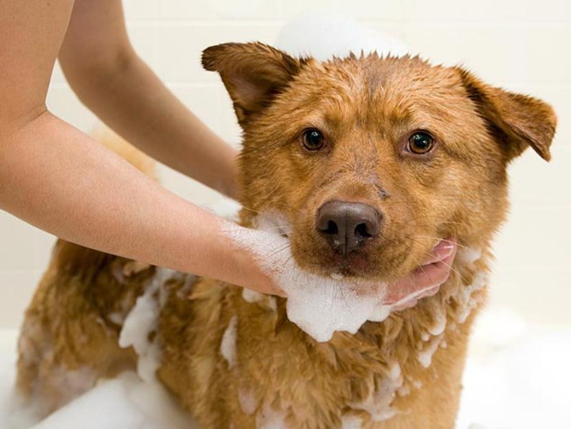 мытье животных 03