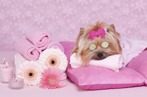 спа услуги для собак 04